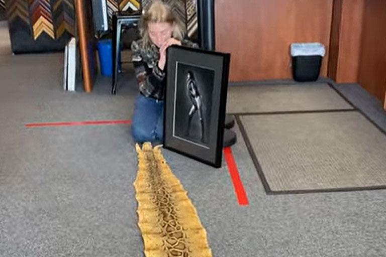 Framed Snake Photo